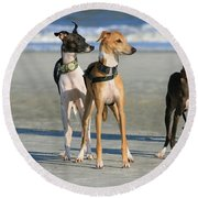 Italian Greyhounds On The Beach Round Beach Towel
