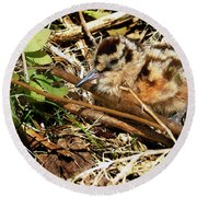 It's A Baby Woodcock Round Beach Towel