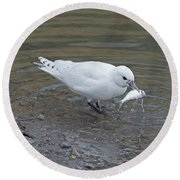 Ivory Gull #2 Round Beach Towel
