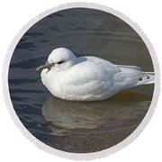 Ivory Gull Round Beach Towel