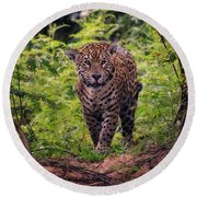 Jaguar      Round Beach Towel by Wade Aiken