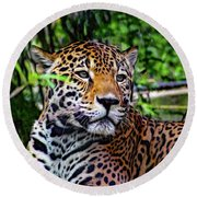 Jaguar At Peace Round Beach Towel