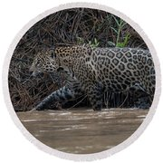 Jaguar In River Round Beach Towel by Wade Aiken