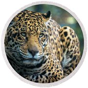 Round Beach Towel featuring the photograph Jaguar by Lisa L Silva