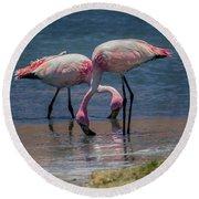 James's Flamingos, Salar De Uyuni, Bolivia Round Beach Towel
