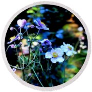 Japanese Anemone In The Afternoon Light Round Beach Towel