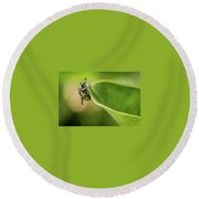 Japanese Beetle On Milkweed Round Beach Towel