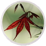 Round Beach Towel featuring the photograph Japanese Maple Leaf by Ann Lauwers