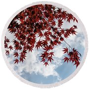 Japanese Maple Red Lace - Horizontal View Downwards Right Round Beach Towel