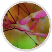 Round Beach Towel featuring the photograph Japanese Maple Seedlings by Brenda Jacobs