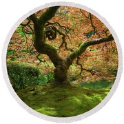 Japanese Maple Tree Bathed In Sunlight Round Beach Towel