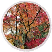 Japanese Maple Trees In Autumn Round Beach Towel
