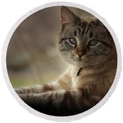 Round Beach Towel featuring the photograph Jaspurr by Kim Henderson