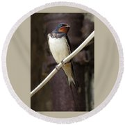 Swallow Round Beach Towel