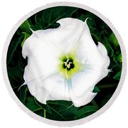Round Beach Towel featuring the photograph Jimson Weed #1 by Lou Novick