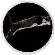 Jumping Cornish Rex Cat Isolated On Black Round Beach Towel