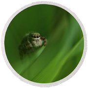 Jumping Spider Contemplating Life Round Beach Towel