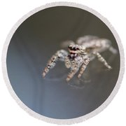 Jumping Spider On Glass Table Round Beach Towel