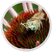 Jumping Spider With Green Weevil Snack Round Beach Towel