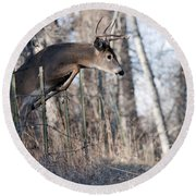 Jumping White-tail Buck Round Beach Towel