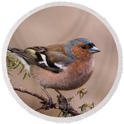 Juniper Bird Round Beach Towel