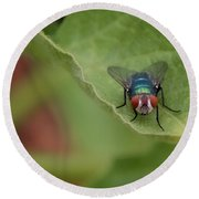Just A Fly Round Beach Towel by Scott Holmes