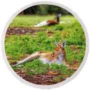 Just Chillin, Yanchep National Park Round Beach Towel