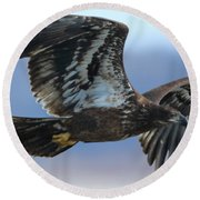 Round Beach Towel featuring the photograph Juvenile Bald Eagle by Coby Cooper