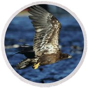 Juvenile Bald Eagle Over Water Round Beach Towel by Coby Cooper