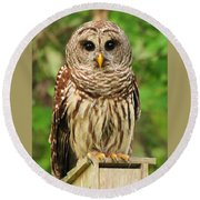 Juvenile Barred Owl Round Beach Towel