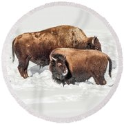 Juvenile Bison With Adult Bison Round Beach Towel