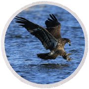 Juvenile Eagle Fishing Round Beach Towel by Coby Cooper