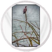 Juvenile Eagle Round Beach Towel