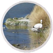 Juvenile Flamingo No. 64 Round Beach Towel by Sandy Taylor