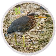 Round Beach Towel featuring the photograph Juvenile Green Heron by Ricky L Jones
