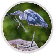 Juvenile Little Blue Heron Round Beach Towel