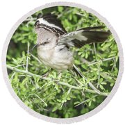 Juvenile Mockingbird With Crossbill Round Beach Towel