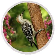 Round Beach Towel featuring the photograph Juvenile Red Bellied Woodpecker by Darren Fisher