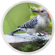 Juvenile Red-bellied Woodpecker In The Rain Round Beach Towel