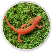 Juvenile Red-eft Green Moss North Carolina Round Beach Towel by Mark VanDyke