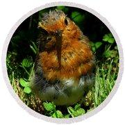 Juvenile Robin 2 Round Beach Towel