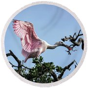 Juvenile Roseate Spoonbill Readying Its Wings Round Beach Towel