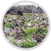 Juveniles Red Footed Boobies Round Beach Towel by Jess Kraft