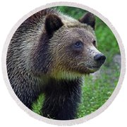 Juvie Grizzly Round Beach Towel by Larry Nieland