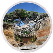 Kalaloch Tree Of Life Round Beach Towel