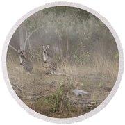 Kangaroos In The Mist Round Beach Towel