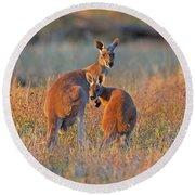 Kangaroos Round Beach Towel