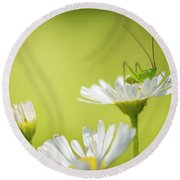 Katydid Round Beach Towel