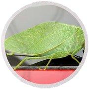 Katydids- Bush Crickets Round Beach Towel