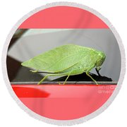 Katydids- Bush Crickets Round Beach Towel
